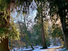 Photo of Winter woodland walk