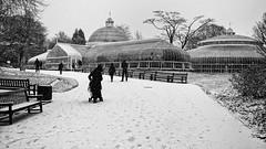 Photo of Botanic Gardens in the Snow