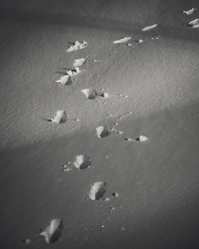 Snowstorm 2021 | Kaunas