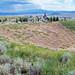Alice Mine (Butte, Montana, USA) 2