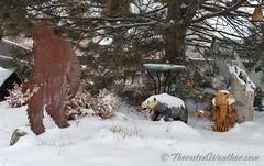 January 26, 2021 - A wintry scene in Thornton. (ThorntonWeather.com)