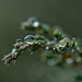 Small Drops
