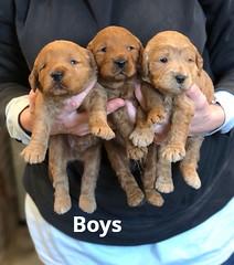 Ginger Boys pic 2 1-29