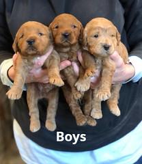 Ginger Boys 1-29