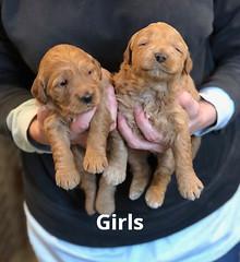 Ginger Girls pic 4 1-29