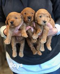 Ginger Boys pic 3 1-29