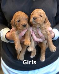 Ginger Girls 1-29