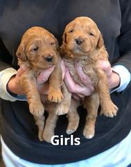 Ginger Girls pic 2 1-29