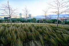 Naturaleza y urbanismo
