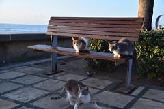 Limassol, morning 31/01/2021