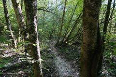 Forêt @ Vallon de l'Allondon @ Russin