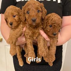 Lola girls 1-31-21 pic 4
