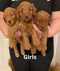 Lola girls 1-31-21 pic 3