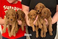 Lola boys 1-31-21 pic 2