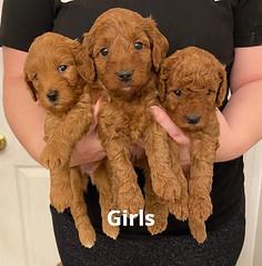 Lola girls 1-31-21 pic 2