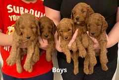Lola boys 1-31-21 pic 4