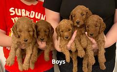 Lola boys 1-31-21 pic 3