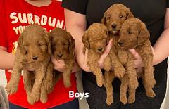Lola boys 1-31-21