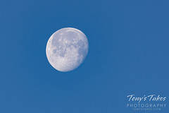 January 31, 2021 - A daytime waxing gibbous moon. (Tony's Takes)