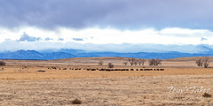 January 30, 2021 - Moody skies on the Front Range. Tony's Takes)