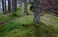 beyond Bergen