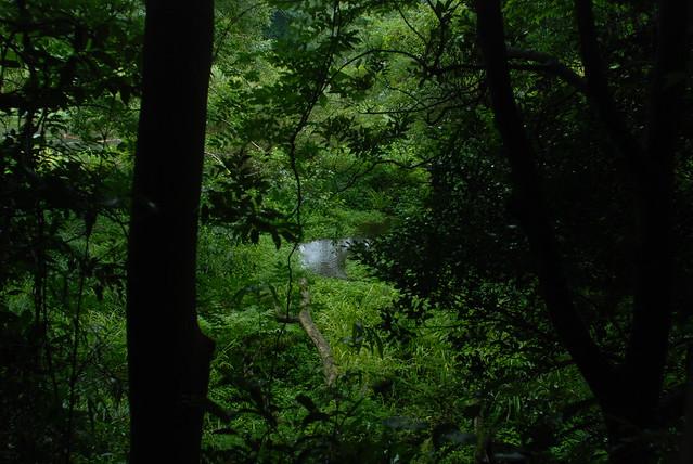 その森の奥には