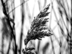 BW Nature Bokeh | February 2 | Bosau - Ostholstein District - Schleswig-Holstein - Germany