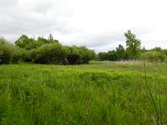 Marais de Poisy