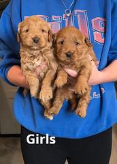 Ginger Girls pic 2 2-5