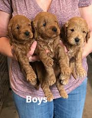 Ginger Boys 2-5