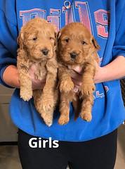 Ginger Girls pic 4 2-5