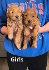 Ginger Girls pic 3 2-5