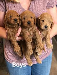 Ginger Boys pic 4 2-5