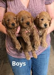 Ginger Boys pic 3 2-5
