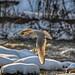 The enlightening seagull