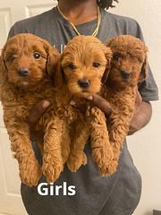 Lola Girls pic 4 2-6