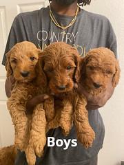 Lola Boys pic 3 2-6