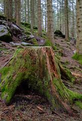 Wald. Forest. Skog