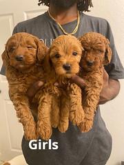 Lola Girls pic 3 2-6
