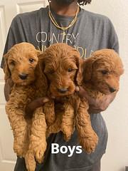 Lola Boys pic 4 2-6