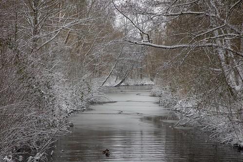Winter at Zuigerplasbos