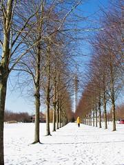 Winter in Lelystad