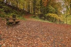 Photo of Alyth Den Paths Alyth Perthshire