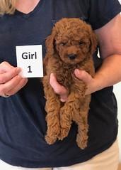 Lola Girl 1 pic 4 2-13