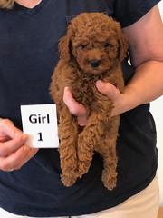 Lola Girl 1 2-13