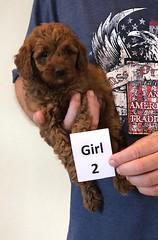 Lola Girl 2 pic 3 2-13