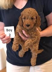 Lola Boy 2 2-13
