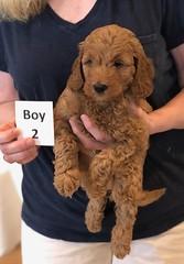 Lola Boy 2 pic 4 2-13