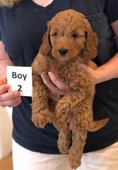 Lola Boy 2 pic 3 2-13