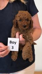 Lola Boy 3 pic 3 2-13